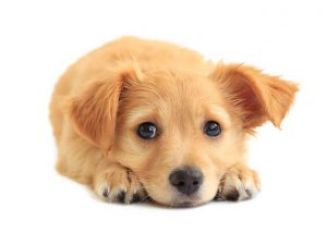 Puppy House-training: Tips for Toilet Training Your Puppy in Their First Few Weeks at Home