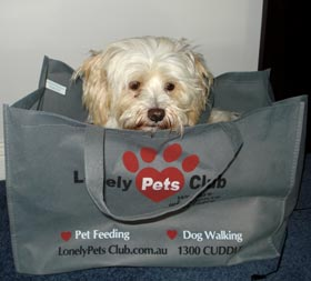 Buffy in a Bag